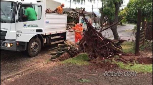 Equipes da prefeitura foram acionadas para realizar a retirada da árvore.(Foto: Catve)