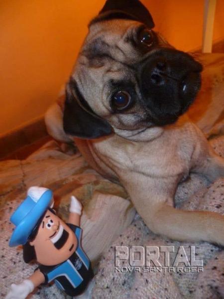 O animal atende pelo nome de Sheldon. (Foto: Divulgação)