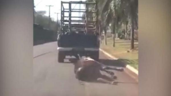 O homem será multado por crime ambiental e pode responder também por delitos de trânsito.Foto: Divulgação