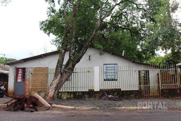 A árvore é de grande porte. (Fotos: Portal Nova Santa Rosa)