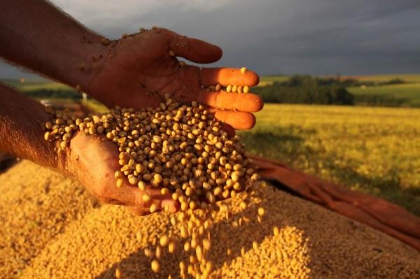 Chuvas contribuíram para a projeção de aumento de 2,2% na safra agrícola deste ano. Prognósticos indicam produção de 224,3 milhões de toneladas.(Foto:Divulgação)