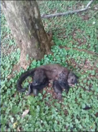 O macaco foi encontrado morto no domingo (11) (Foto: Reprodução )