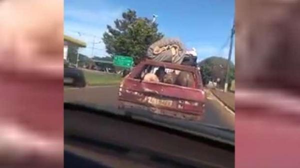 Os animais estão presos dentro do porta-malas do veículo. (Foto: Internauta)
