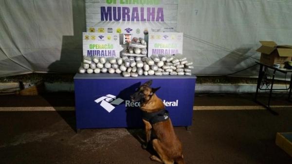 A droga totalizou 68,310 kg. (Foto: Assessoria)