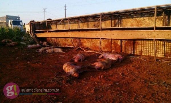 Os animais ficaram espalhados pela pista. (Foto: Guia Medianeira)