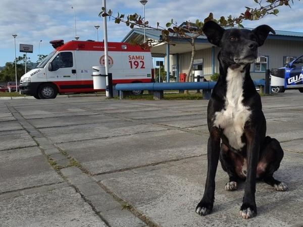 Negão ficou no pátio do hospital por quase três anos a espera do dono (Foto: Luiz Souza/RBS TV)