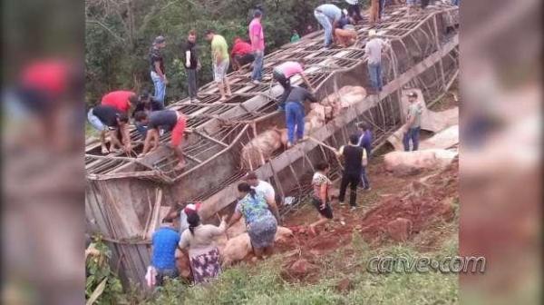 Empresa proprietária do caminhão permitiu que moradores levassem suínos para casa. (Foto: Catve)