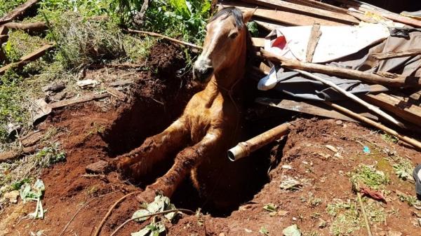 O buraco não era muito profundo, mesmo assim o animal não conseguia sair. (Foto: CGN)