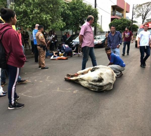 Segundo informações da Polícia Militar (PM) dois animais estavam soltos na via. (Foto: TNOnline/Blog do Berimbau)